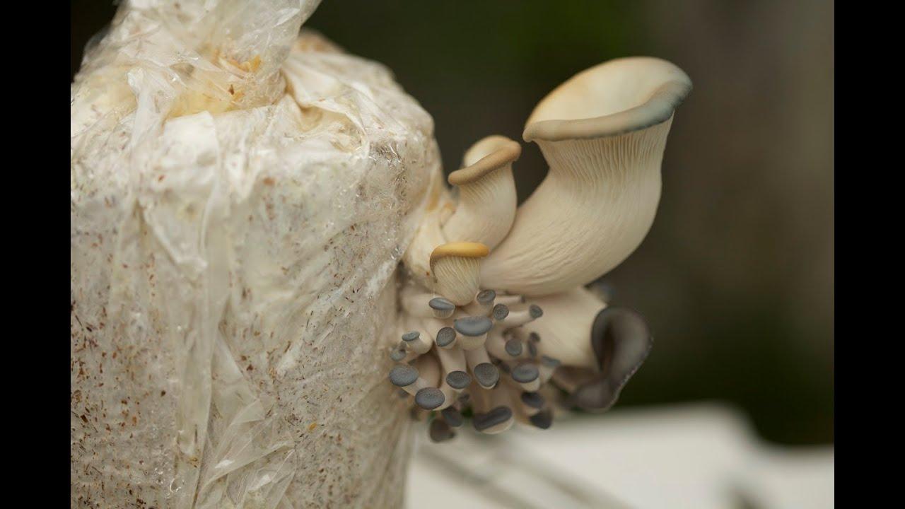 Mushroom Kir Media, videos and Reviews