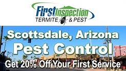 Termites - First Inspection - Pest Control Scottsdale