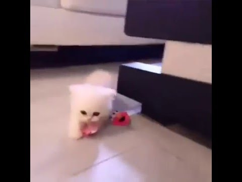 Cute Baby Kitten Stealing Pacifier Youtube