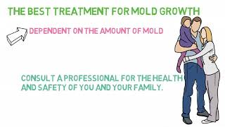 Does Bleach Kill MOLD and Mildew?