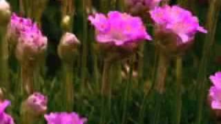 Цветы умеют петь