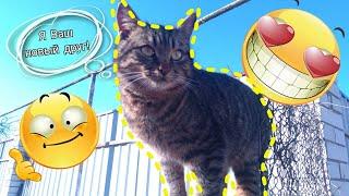 Кошачий рай!Новый друг!Новый кот во дворе!Увидели Рысю.