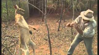Känguru Kampf
