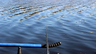 Рыбалка 2019. Фидер. Стрим. Осень.