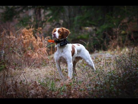 Ruffed Grouse Society Pennsylvania Upland Bird Hunt 2015