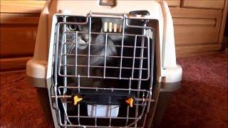 #680 США Аляска Магазины для животных Новая клетка для Сквики