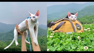Spring outing with my cat (Devon Rex)