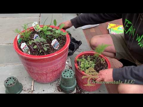 Herb Container Planting in Connecticut