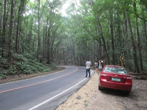 Bohol Man Made Forest, My Motorcycle Adventures ~ Bohol Philippines