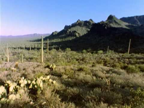 çölde vahşi yaşam ( desert wild lıfe )
