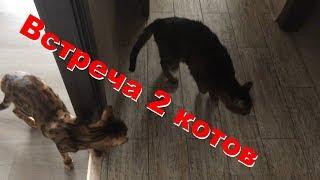 Кот прогнал чужого кота с квартиры 😻 ⚡️ 😺