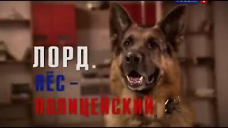 Лорд. Пёс-полицейский 1 Серия