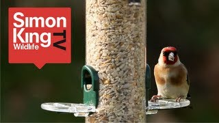 How To Feed Garden Birds