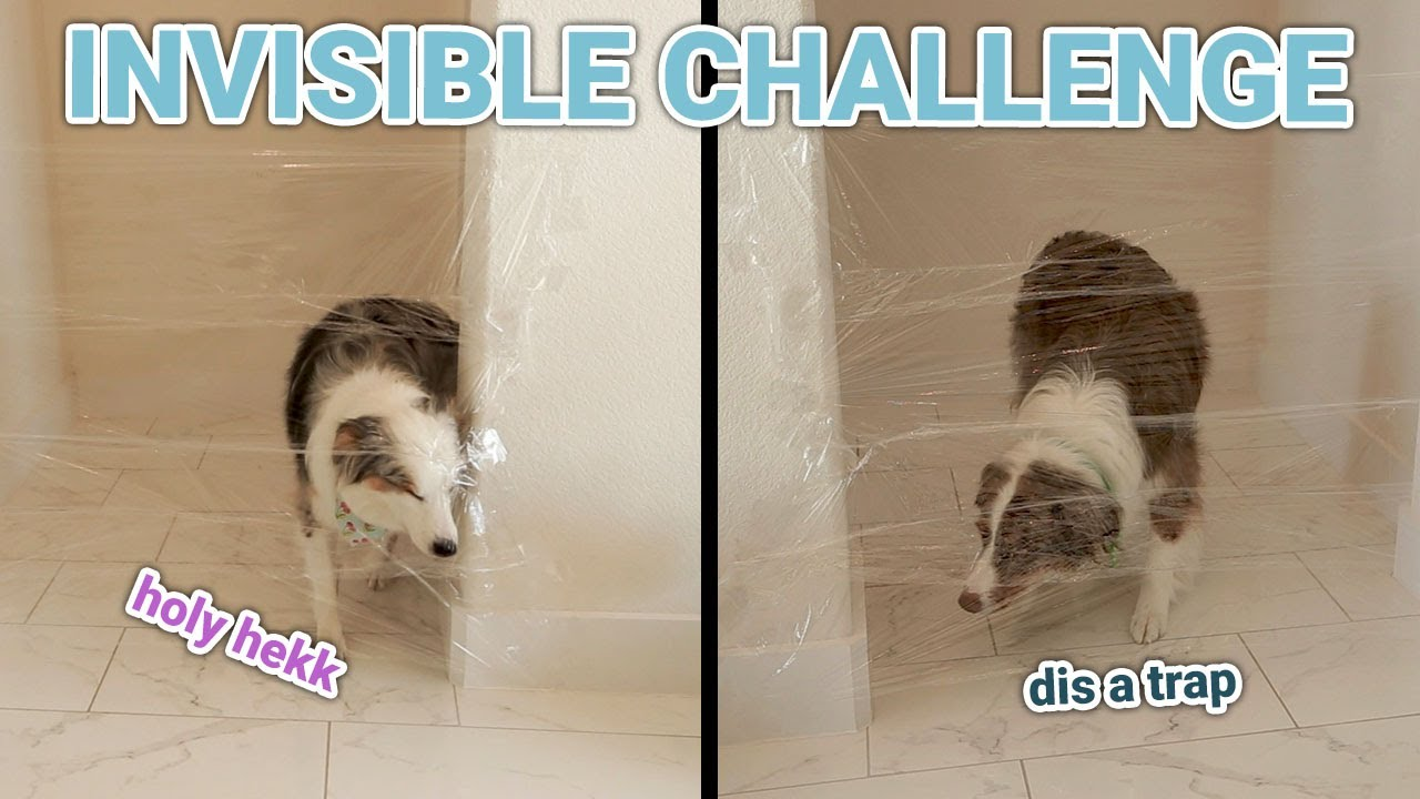 Aussies React to Invisible Wall Challenge