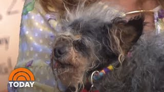Scamp The Tramp Crowned As World's Ugliest Dog | TODAY