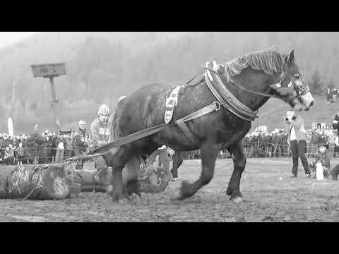 Arklio galiomis varomos