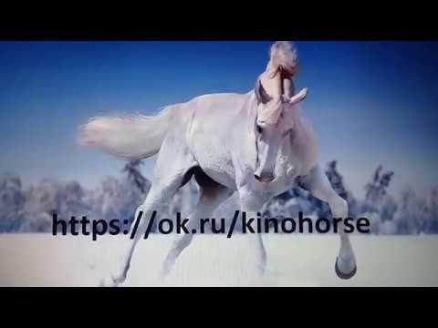 Домашняя лошадь — Википедия