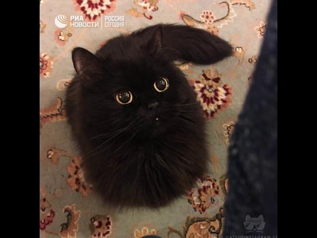 День черных кошек