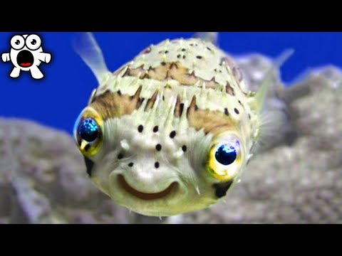 Top 20 Cutest Animals That Can Actually Kill You