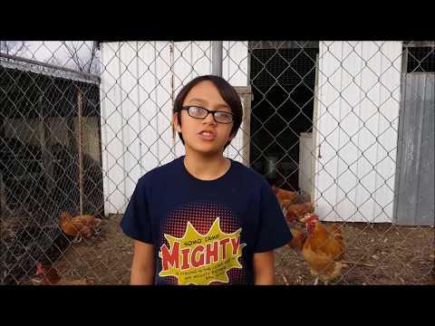 Chickens Love Winter Squash