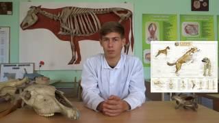 Профессия ветеринар глазами студента