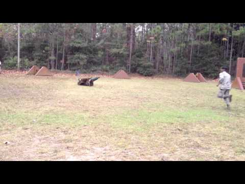 military-working-dogs