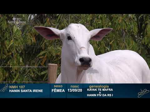LOTE 6   NMH 107