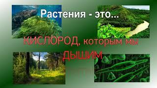 """окружающий мир 1 класс проект """" зачем нужны растения"""""""
