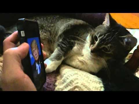 Cat HATES U.S. President Donald Trump