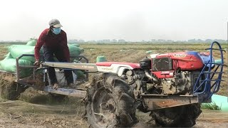 KALE THONG transports rice nex…