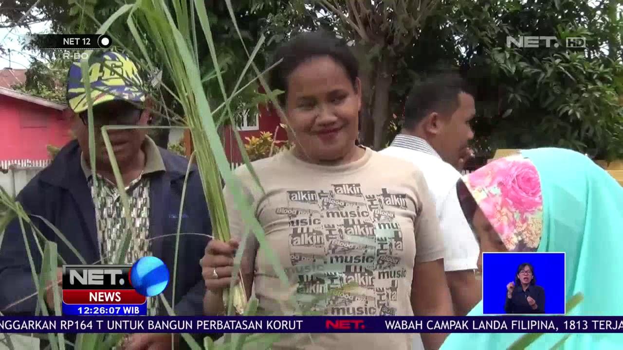 Budidaya Serai Jadi Cara Warga Lawan Demam Berdarah NET12 ...