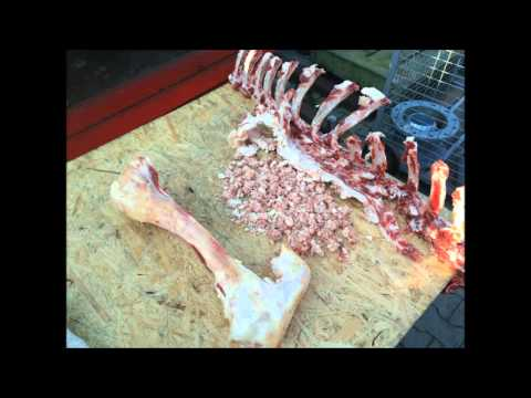 XRipper XRL Twin Shaft Grinder - Animal Bone Processing