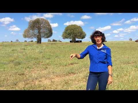 Trish Rowbotham - Wallumbilla Campdraft Association