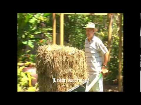 incredible tropical garden brisbane | Sub Tropical Brisbane Garden - YouTube