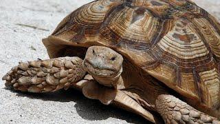 JPMorgan's David Kelly: U.S. Economy Is a 'Healthy Tortoise'