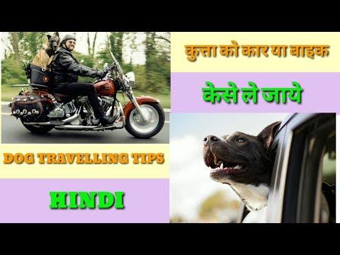 Pet Care - Dog Travel car and bike  Vehicle in Hindi|| At mix || Dog Traveling tipes