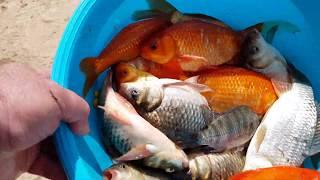 Рыбалка на озере Ерухам דיג באגם ירוחם 13 11 2019