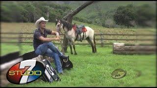 vuclip BANDA 100 PAREA Vaqueiro novo