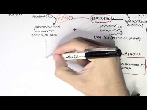 Part I - Aracidonic Acid Metabolites