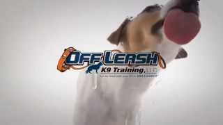 Porsche Beagle Mix On Her First Lesson. Howard County Dog Trainers - Off Leash K9 Training