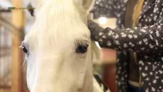 Стрижка лошади