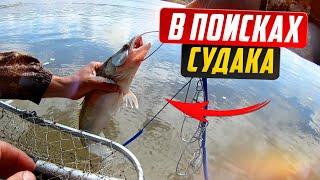 Рыбалка на реке Обь Судак щука окунь