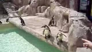 Penguins @ Marineland Mallorca