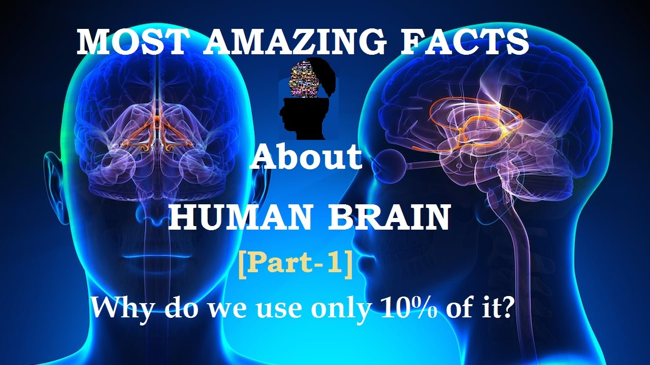 What Happened to the Hominids Who May Have Been Smarter Than Us?