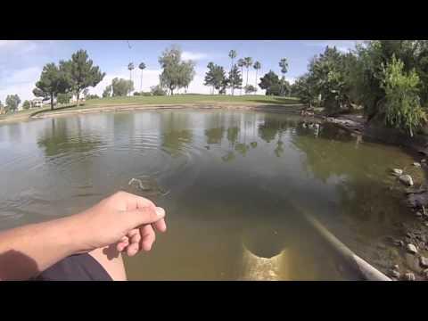 Bass fishing in tempe arizona az doovi for Bass fishing az