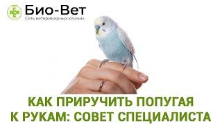 как сделать чтобы попугай садился на руку
