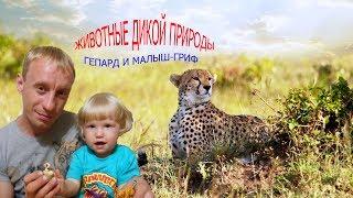 журнал №9 животные дикой природы (DeAgOsTiNi)