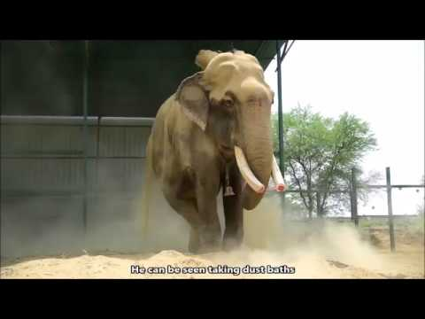 Gajraj's New Life At ECCC