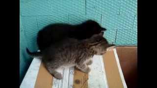 Милые и озорные котята