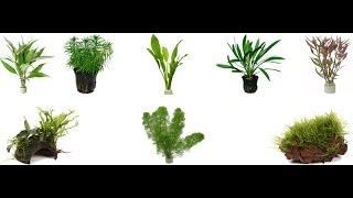 PREPARING AQUATIC PLANTS FOR A TANK!